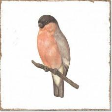 Плитка Fabresa Forli DECORBIRDS 7×150×150